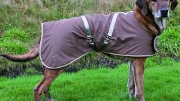 Manteau de chien