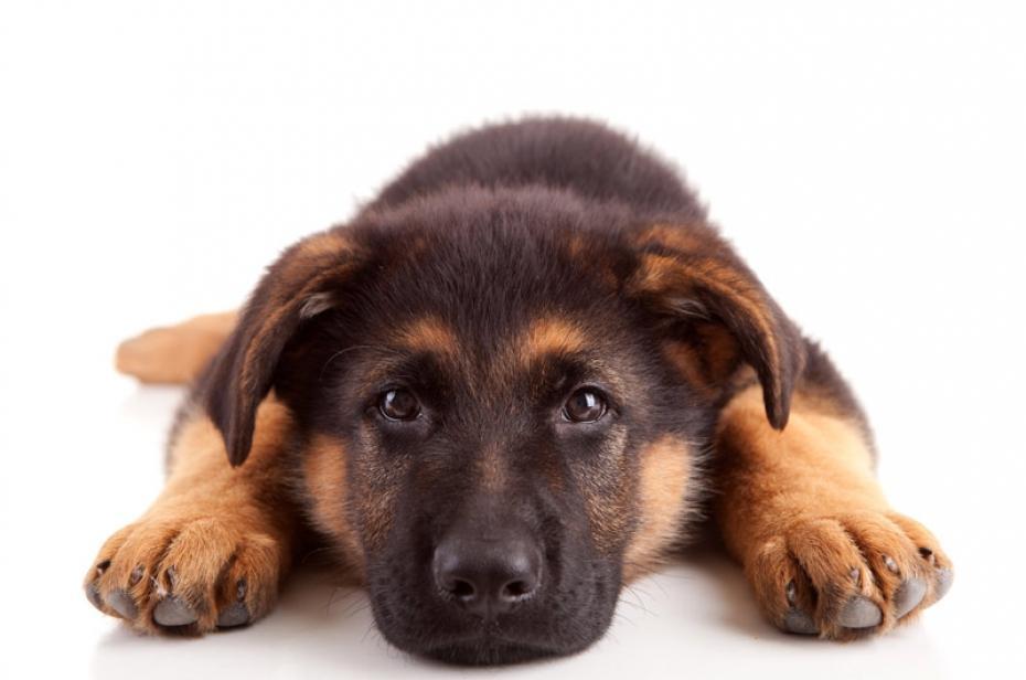 Acheter un chien tendances et animaux - Image bebe chien ...