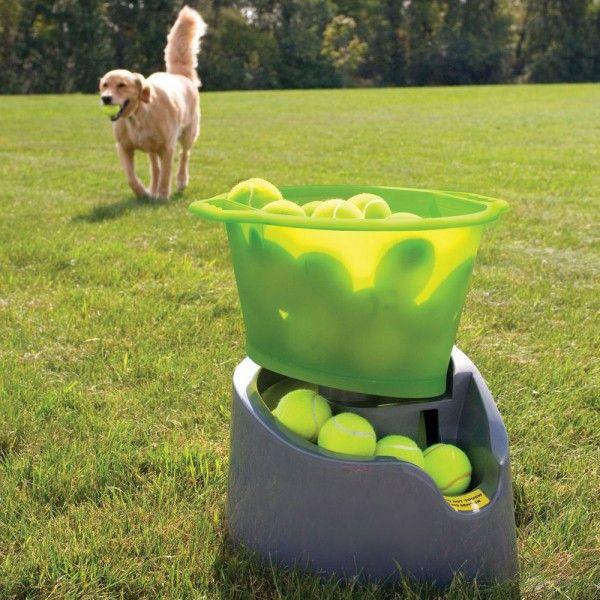 Dog Tennis Ball Launcher >> Jeux pour chien - Tendances et Animaux